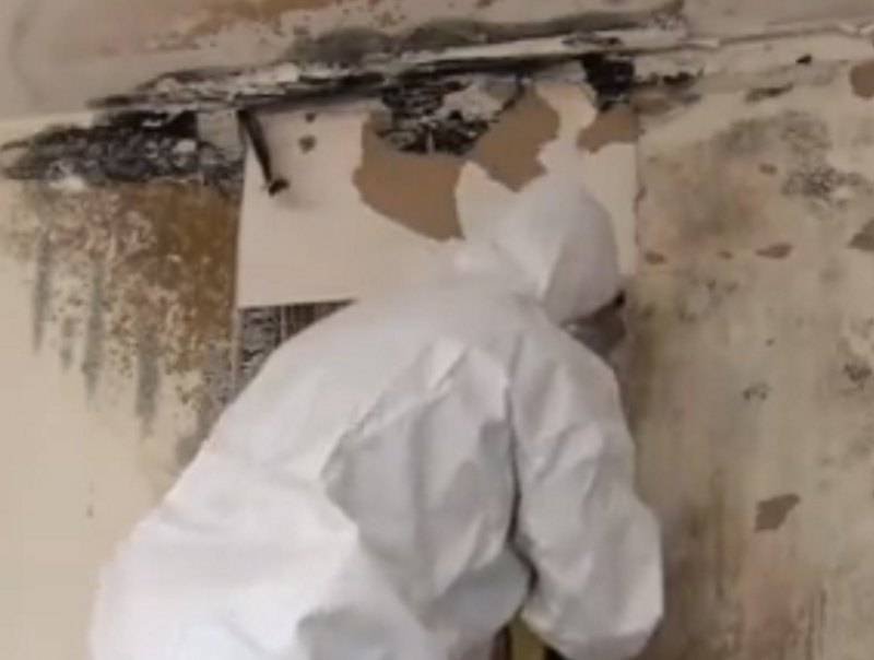 Termite Inspections